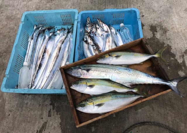9月2日(土)の釣果(タチウオ船中51匹・サワラ1匹・ハマチ3匹)